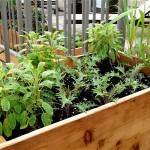 Roof Deck- Kale